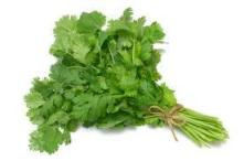 herbs and spices coriander