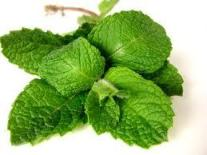 herbs and spices mint