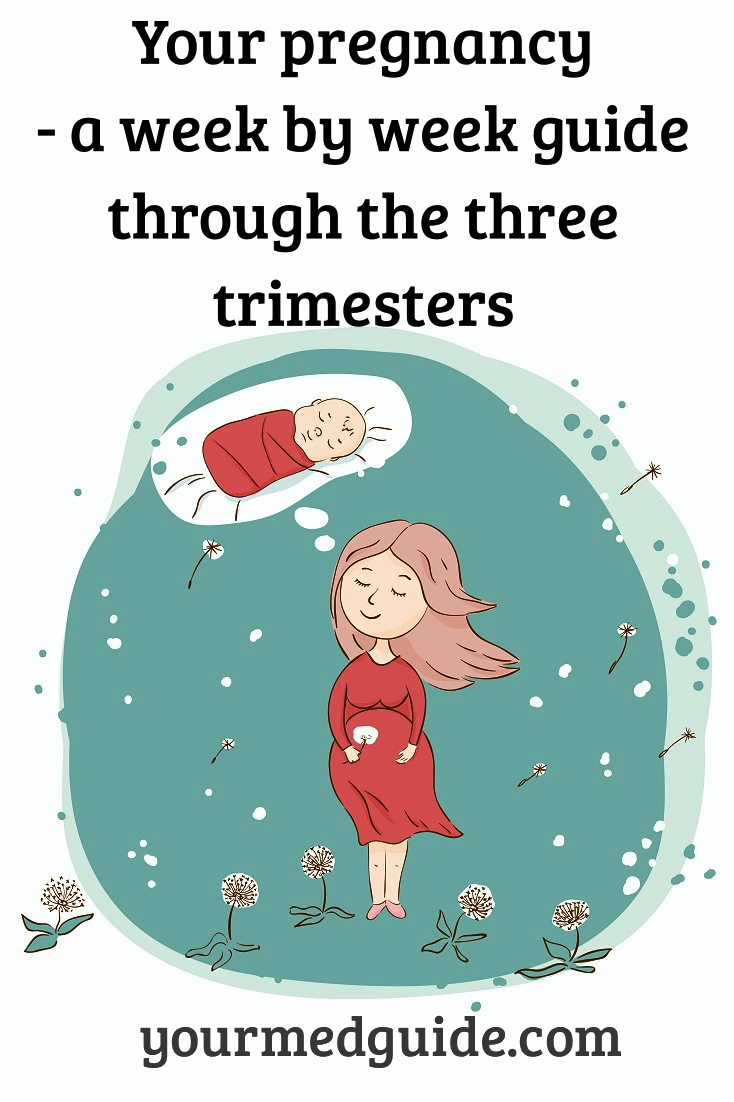 What to expect when you are pregnant. A week by week guide to your pregnancy stages, the three trimesters, the forty weeks! #Pregnancy #pregnancyhealth #health #motherandbaby