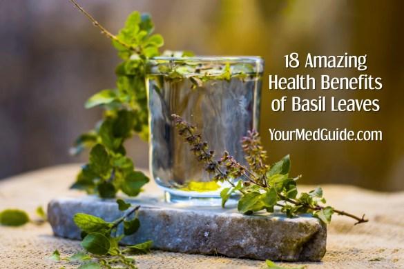 18 amazing health benefits of basil leaves - Tulsi