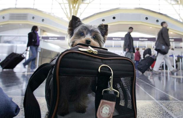 Your Pets Can Earn Rewards For Flights! Here's How!