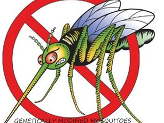 Petition against genetically modified mosquitoes