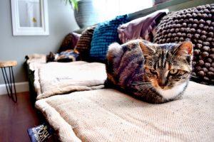 Afbeeldingsresultaat voor kattencafe poespas leeuwarden