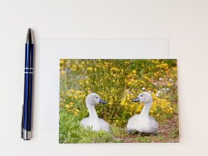 Cygnet Siblings Greetings Card