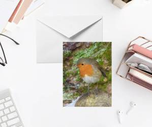 Contemplative Robin Photo Greeting Card by Yours Faithfully Hannah Kirk