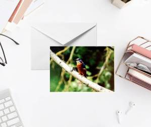Kingfisher Photo Greeting Card by Yours Faithfully Hannah Kirk This is an A6 Greeting Card with a Photo of a Kingfisher on the front.