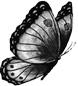 Butterfly-BW