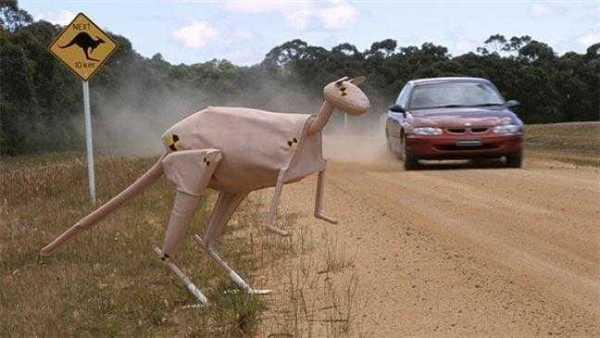 Kangaroo Detection System