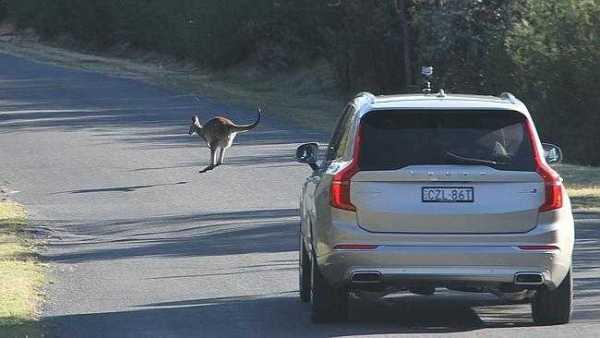 Volvo Kangaroo Detection System