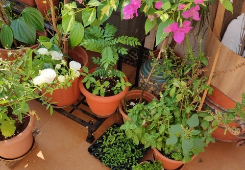 Love and Herbs on My Terrace Garden