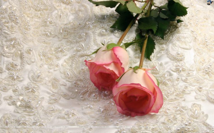 Happy Rose Day Images HD Download for Free