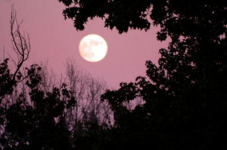Full moon in dark scary night