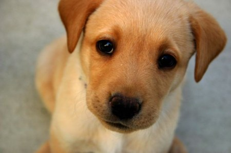 brown-puppy-kids-story-moral
