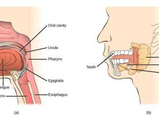 What is digestion in buccal cavity? In biology