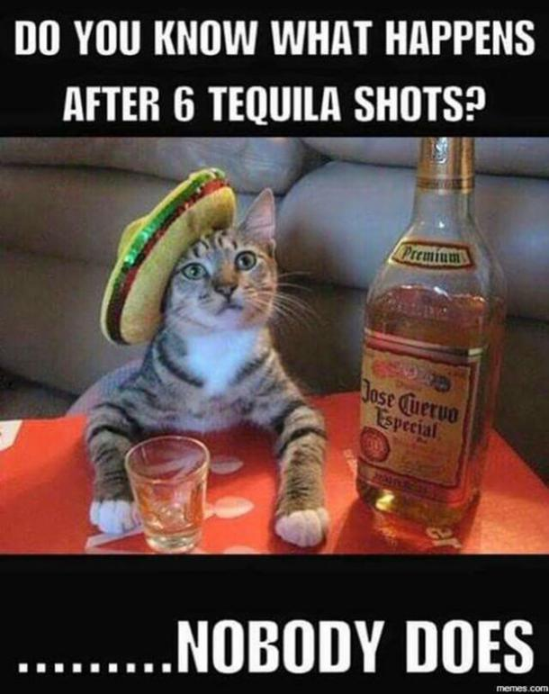 National Tequila Day Meme : national, tequila, Funny, Tequila, Memes, Celebrate, National, YourTango