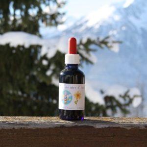 Arnica teinture mère bio yourte végétale montaimont saint françois longchamp savoie ferme agriculture