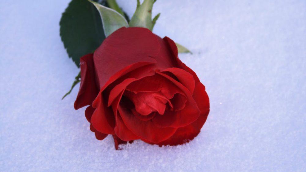 goûter saint valentin rose rouge naturopathie nature ferme bio yourte végétale saint françois longchamp savoie bien être
