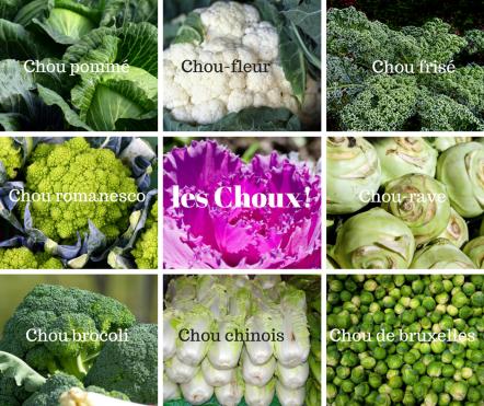 les différentes sortes de chou naturopathie nature ferme bio yourte végétale saint françois longchamp savoie bien être