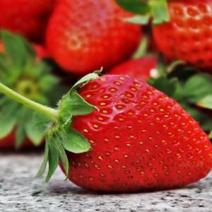 fraises gariguettes cultivées en permaculture nature ferme bio yourte végétale saint françois longchamp savoie