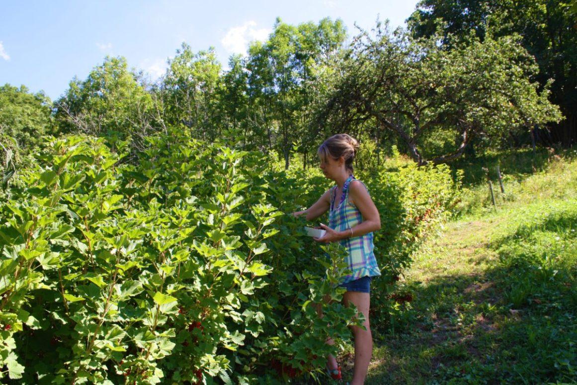 cueillettes bio yourte végétale montaimont saint françois longchamp savoie ferme agriculture