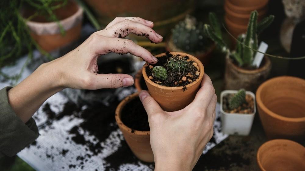 écologie tourisme vert partenariat soins naturopathie nature ferme bio yourte végétale saint françois longchamp savoie bien être