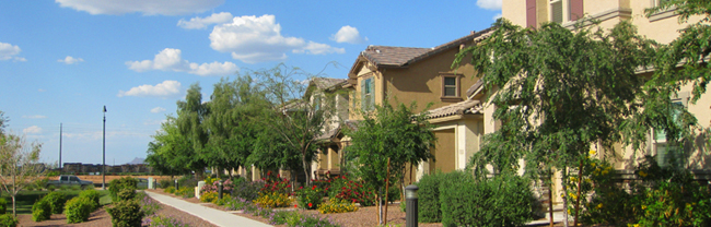 Arizona Community, tree-lined street