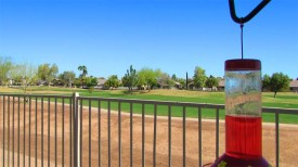 Hummingbird feeder and view fence with desert golf course beyond - 1151 S Sandstone Street, Gilbert Arizona - PebbleTec Pool - Bill Salvatore, Arizona Elite Properties 602-999-0952 - Arizona Real Estate