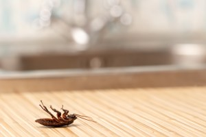 Dead cockroaches on a counter top near the sink. - Natural, organic pest treatments, home remedy for pests, ants, roaches, mosquitos, flies, bugs - Bill Salvatore, Arizona Elite Properties 602-999-0952 - Arizona Real Estate