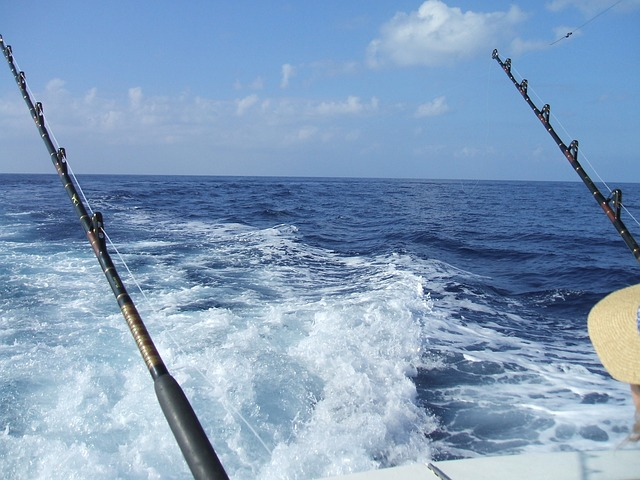 deep sea fishing marlin pixabay rods ocean