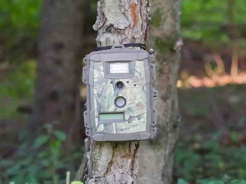 best trail camera under 100-150 dollars, Best Trail Camera Under 100-150 Dollars-For Yard or Garden Wildlife!