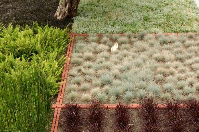 La Coorniche plantings