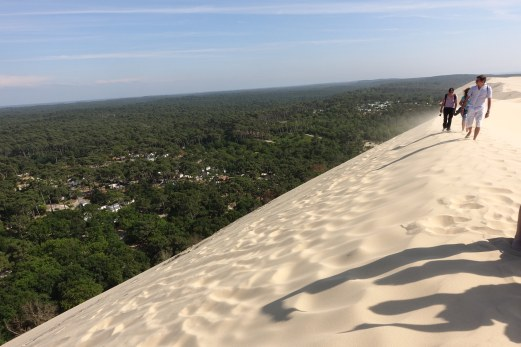 Dune du Pilat pine trees