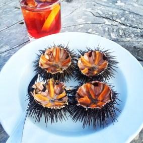 La Table de la Plage Murtoli sea urchins
