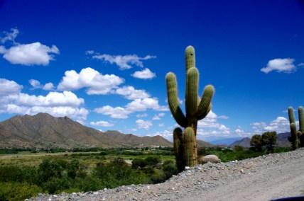 Ruta 40 Salta Argentina cactus