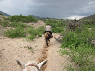 Estancia Colomé on horse