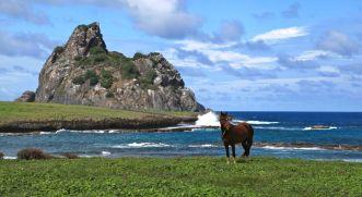 Horse near Air France
