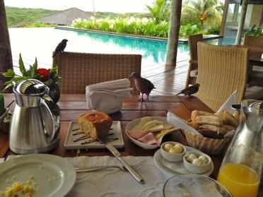 Pousada Maravilha breakfast bird