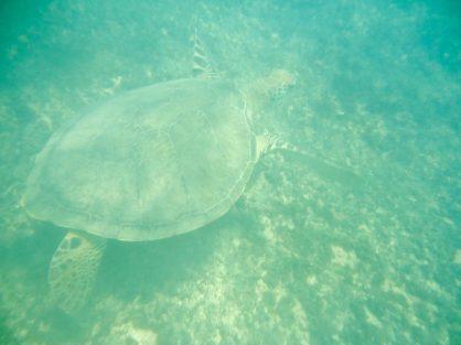 Praia do Sueste snorkeling