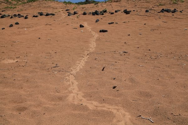 Praia do Leao. I have no idea what must have made these tracks.