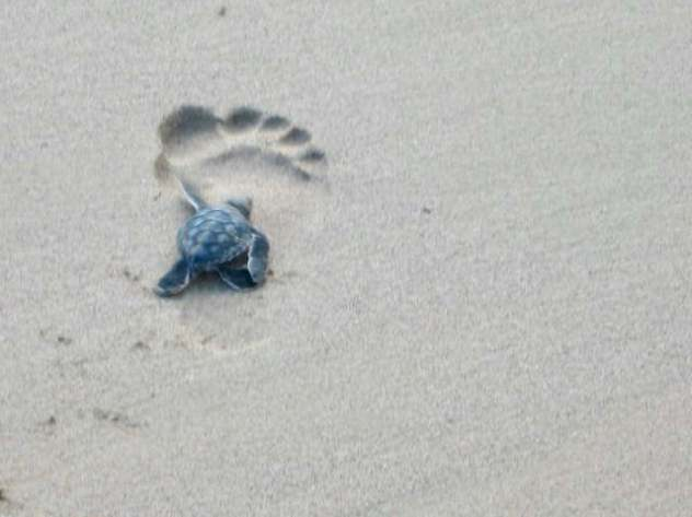 As a protected marine reserve, there are all sorts of sea turtle hatcheries. Sometimes you can see them hatch and run for the sea.