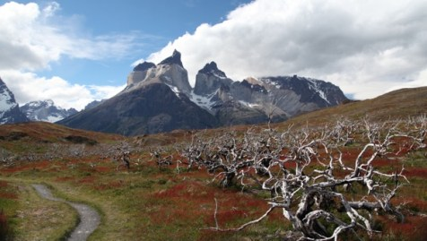Torres del Paine National Park forest fire damage
