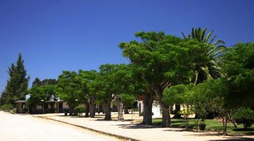 Pueblo Garzon street trees