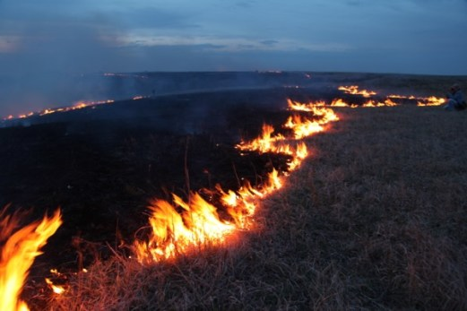 Flying W Ranch fire line edge