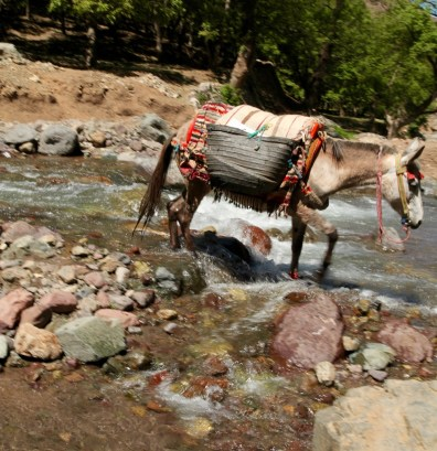Hiking in the High Atlas donkey
