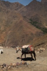 Hiking in the High Atlas Tamatert donkey on trail