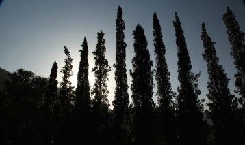 Kasbah Tamadot cypress trees