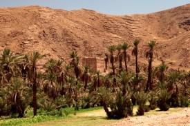 Morocco oasis palm trees