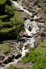 Waterfalls in Toubkal park with cow.