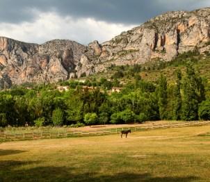 La Bastide de Moustiers donkey