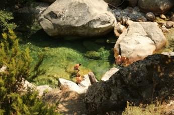 Gorge de Restonica sunbathing